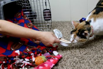 Tips on Leaving Your Cat With a Pet Sitter